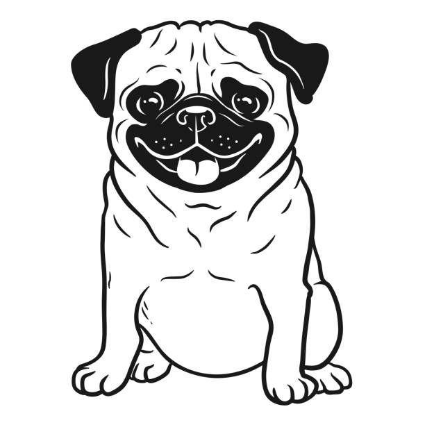 Pug Dogs White Pugs En 2020 Arte Pug Tatuaje Pug Dibujos De Perros