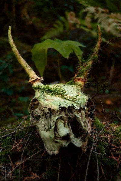 I once found a part of the jaw of a doe in the forest, teeth and all. I incorporated the piece of bone into a statue of my Wild Woman Goddess, the Protectress.