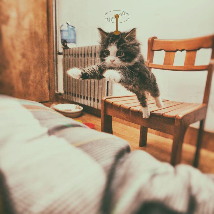 Fly kittie!
