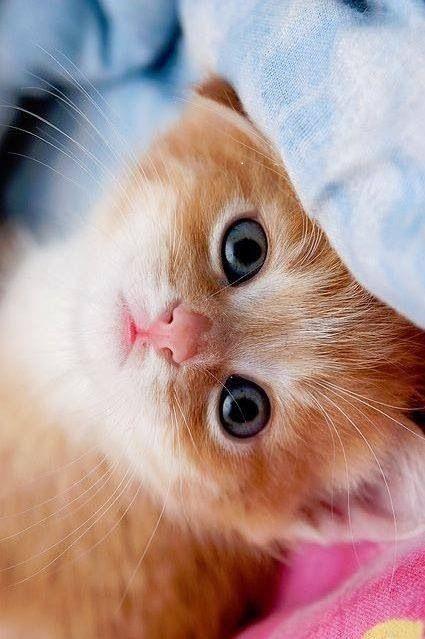 Cute !