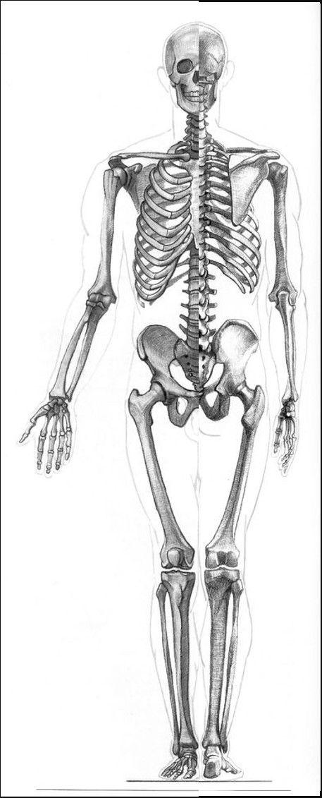 28 best Anatomy Gottfried Bammes images on Pinterest | Anatomy ...