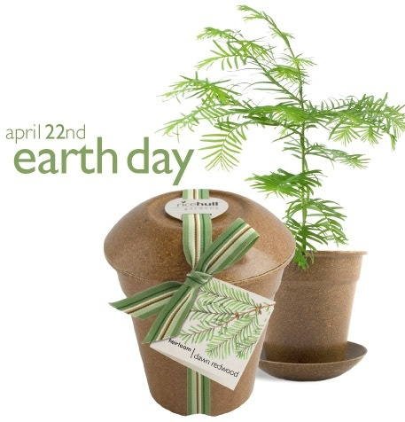 Here is an Eco-Friendly Client Gift for Earth Day. It's a Redwood Tree Plant Kit ready for the giving. Remember that April 22nd is Earth Day.