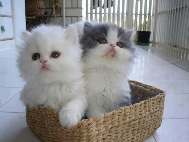 A basket of kittens.