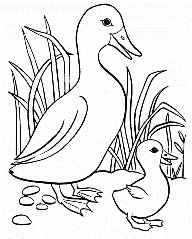 Small Duck With Big Eyes Coloring Pages For Kids Printable Ducks