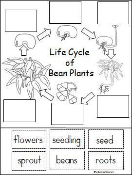 1000 ideas about plant life cycles on pinterest life cycles plant parts and parts of a plant. Black Bedroom Furniture Sets. Home Design Ideas