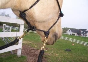 Natural Horsemanship Riding Halter BITLESS Bridle Hackamore Side Pull Yacht Rope | eBay