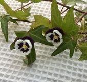耳たぶに一粒のお花がちょこんと咲きます。 白×紫のパンジーがとってもキュート。 センターの黄色は20番レース糸、花びらは40番レース糸で丁寧に編みました。 直径約1.8㎝の花が程よく大きすぎず、大げさにならないので、 お子さまはもちろん、大人の女性の方にも、十分お使いいただけると思います。   特別な日に、普段使いに、 どちらでも活躍しそう。  毎日が少し楽しくなる、そんなアクセサリーです。  イヤリングパーツは真鍮メッキ。色はゴールドです。 アレルギー非対応です...