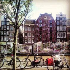 Bloemenmarkt flower market amsterdam