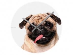 Zegar ścienny KARLSSON Crazy Dogs Leo szklany  http://www.citihome.pl/zegar-scienny-karlsson-crazy-dogs-leo-szklany.html