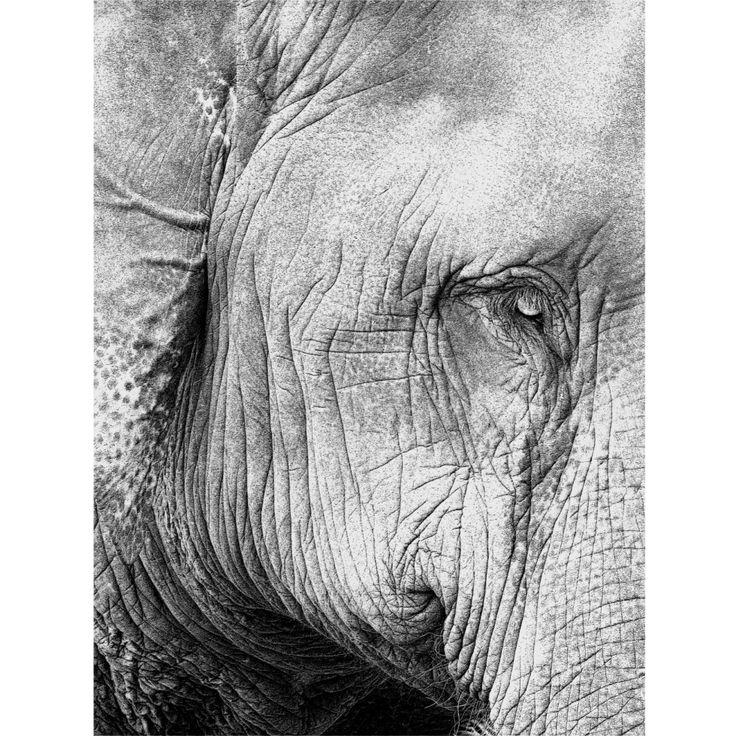 Profile Print   Project Elephant