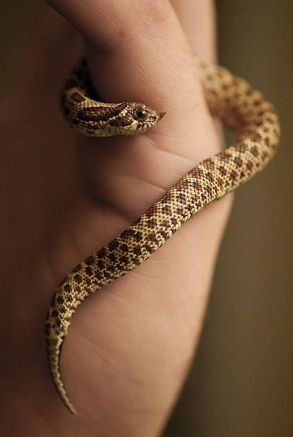 how to get over my fear of snakes