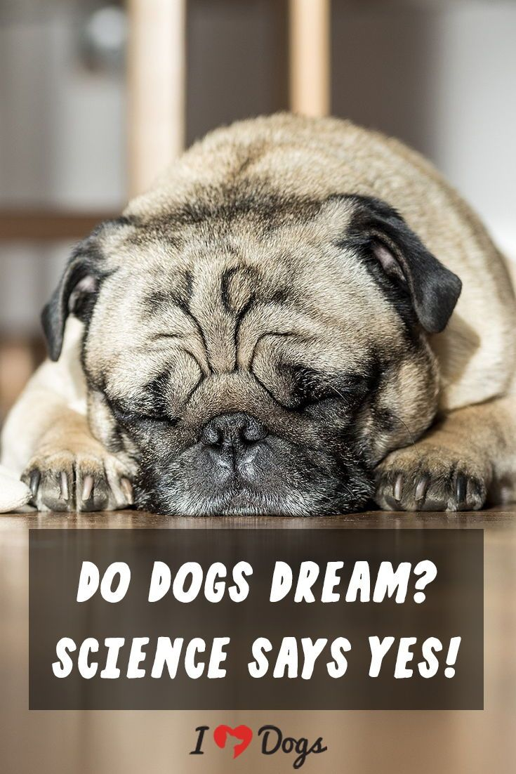 Do Dogs Dream Science Says Yes Fun Facts About Dogs Sleeping