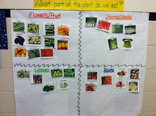 Sorting activity - what parts of the plant do we eat.  Goes with book Tops and Bottoms