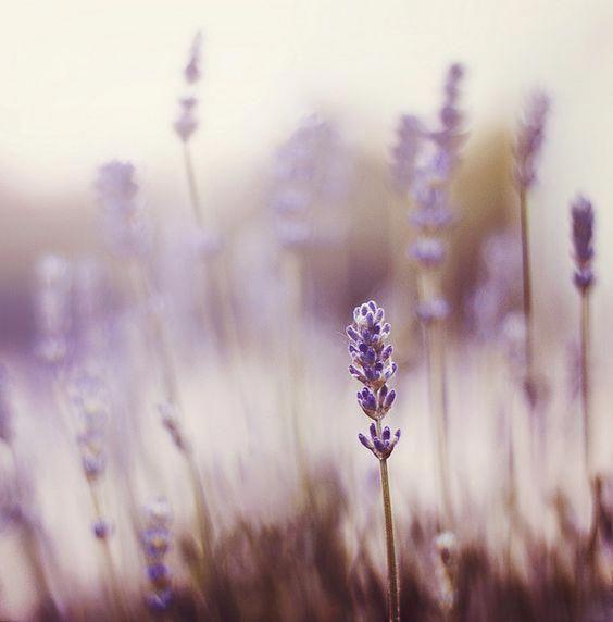 Organic Gardening Forum | Ffxiv Gardening | Flowers