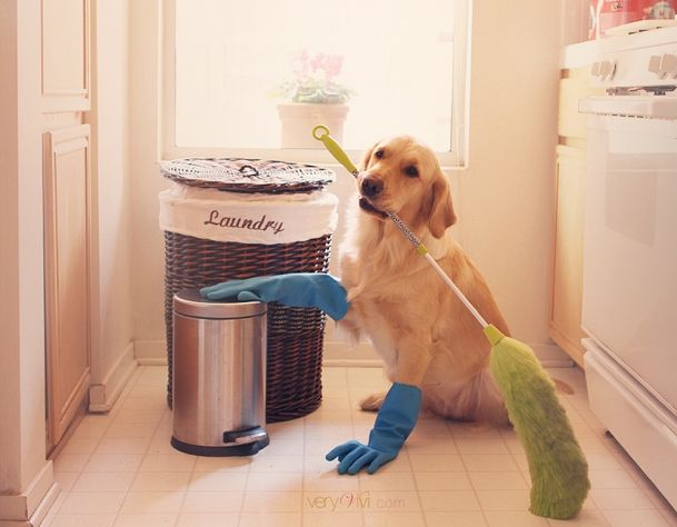 "Say ""No!"" To Chemicals! Dog-Friendly Cleaning Products http://b.dogv.ac/1SWVqPL"
