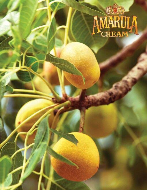 Мы любим и едим, этот экзотический фрукт Amarula... Россия Сургут.