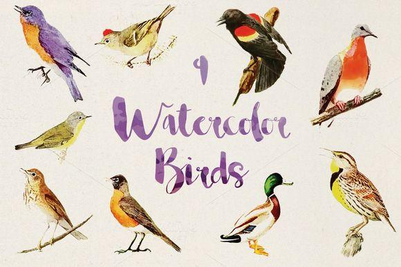 9 Vector Watercolor Birds by BART.Co Design on @creativemarket