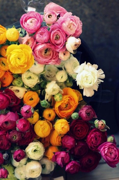 Colorful array of ranunculus found on Gypsy Purple Home