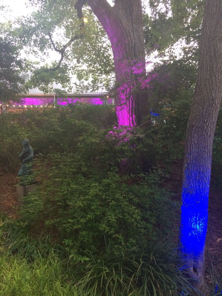 Intelligent Lighting Design at the Umlauf Sculpture Garden Party 2014. Purple & blue uplighting. Tree lighting. Festoon lighting.