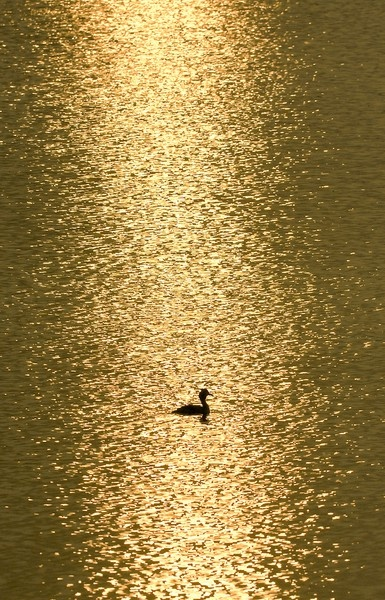 the way the sun is glistening on the water...it looks like gold !!  Beautiful snapshot