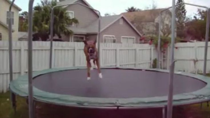 Chago is one of the world's most famous boxers! His trampoline video has gone viral with nearly 3 million views! How is that good news? It's simple: Watching this video will warm your heart and make you smile. That's good news to me!