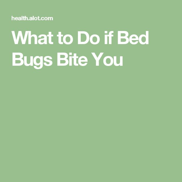 17 Best Ideas About Bed Bugs On Pinterest
