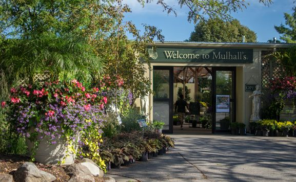 Mulhalls Garden Store   Omaha NE   Grows Most Of The Plant Material It  Sells,