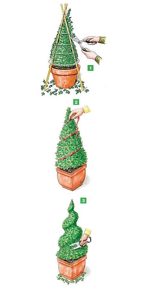 Die beste Zeit für den Buchsbaum Formschnitt ist März oder gegen Ende Juni. Ein leichter Rückschnitt bereits geformter Figuren ist während der ganzen Wachstumsphase der Buchsbäume möglich. 1) Ein selbst gemachtes Gestell aus Bambusstäben und mehreren Drahtringen hilft beim Schneiden eines Kegels. 2) Anschließend wird ein Band spiralförmig um den Buchsbaumkegel gelegt. 3) Daran entlang kleine Furchen schneiden. In den folgenden Jahren die Furchen mit der Schere immer mehr zur Spirale…