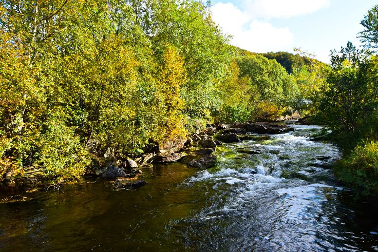 River running down the beautiful autumn forest