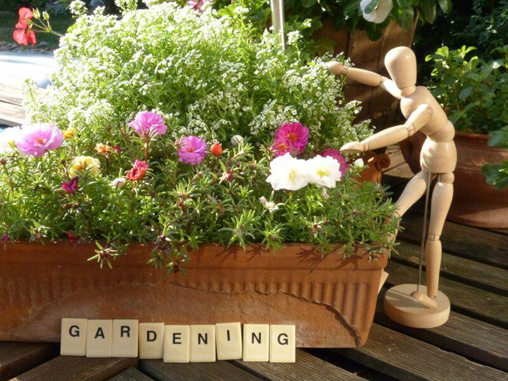 Kertészkedés - Mindenki Kertje