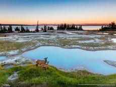 Йеллоустонский национальный парк, США. Автор фото — Qian Wang, участник фотоконкурса «Nature Photographer of the Year»: