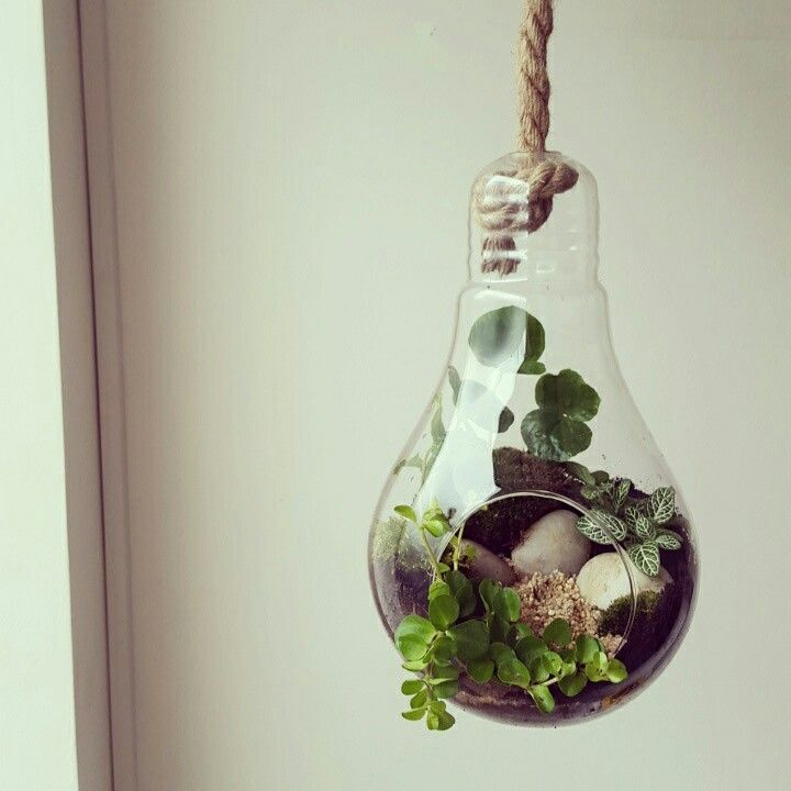 Turbo 52 best Terrarium bocal images on Pinterest | Gardening, Orchid  FQ83