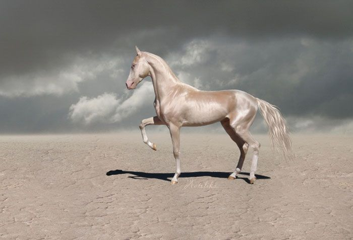 People Are Calling This Super Rare Creature The World's Most Beautiful Horse – animaux