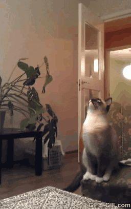 GIF: Cat FAIL - www.gifs-gif.com
