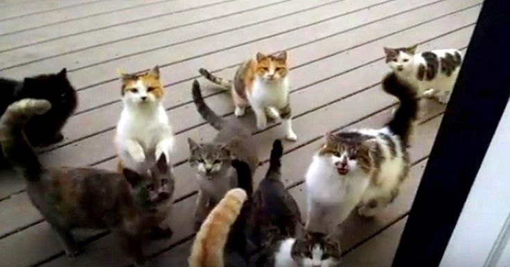 Every Day These Cats Show Up At His Door For A Hilarious Routine - I\u0027m In Stitches! The number of cats has grown in size over time. & Every Day These Cats Show Up At His Door For A Hilarious Routine ... Pezcame.Com