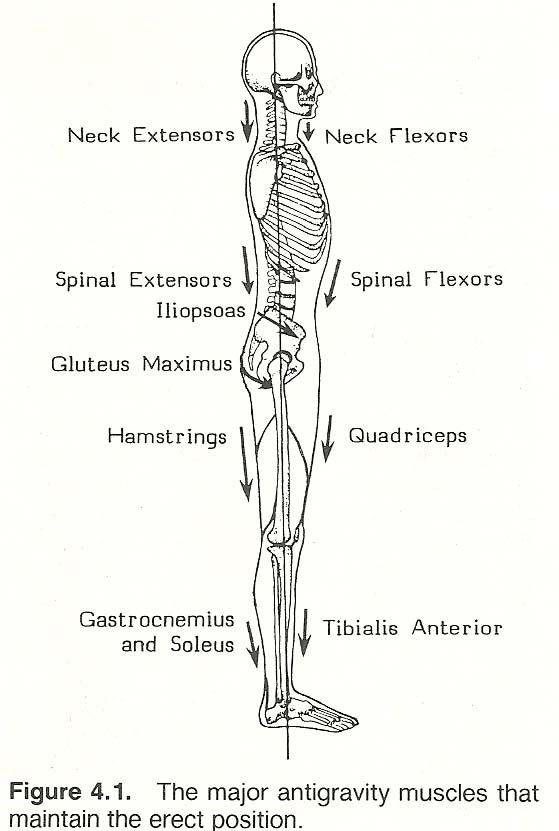 37 best anatomy  u0026 physiology