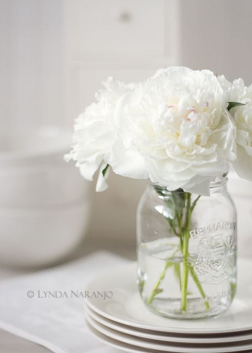 Best ideas about white peonies on pinterest