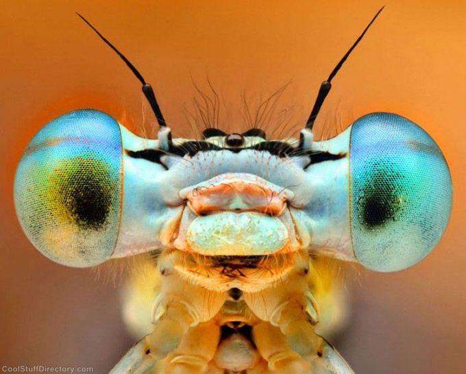 Incríveis close-ups de olhos de insetos