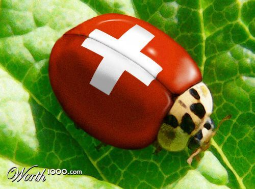 Swiss Lady Bug - Worth1000 Contests