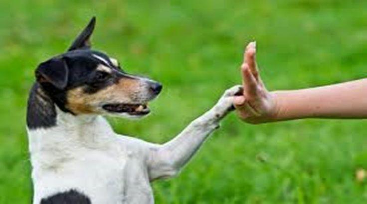 Köpek Eğitiminin Sınırları ve Türleri