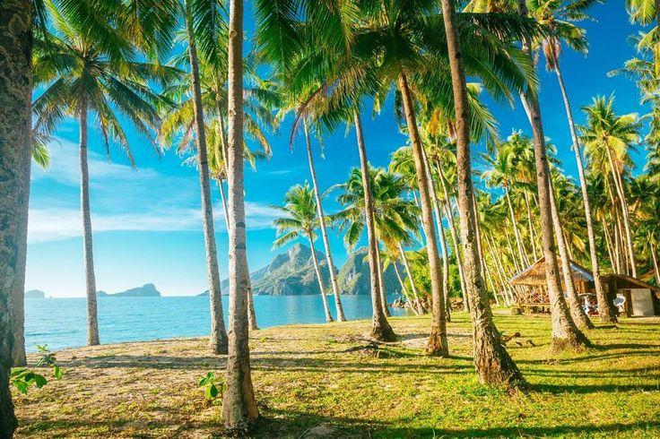 """124 tykkäystä, 3 kommenttia - KILROY Finland (@kilroyfinland) Instagramissa: """"😍😍 #filippiinit #palmujenalla #reissussa #seikkailu #jokomennään #lähtökuopissa #matkavinkki…"""""""