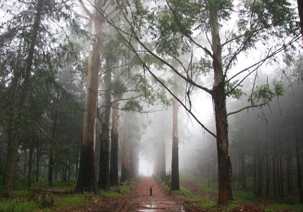 Magoebaskloof, Limpopo Province.  Christmas Day in the mist in a forest in Magoebaskloof, South Africa. My son was mystified by the tall trees and the mist. Lonely and at peace. Your South Africa Photos -- National Geographic