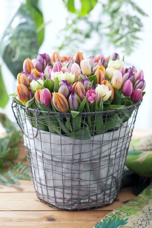 Tulips in a bucket!