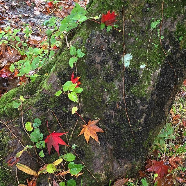 【clef_boite】さんのInstagramの写真をピンしています。《苔むした木に落葉したもみじ🍁 #ドライブ#日帰り#旅行#紅葉#紅葉狩り#霧雨#苔#林#せせらぎ街道#西ウレ峠#岐阜#高山#飛騨高山#飛騨#drive#trip#drizzle#moss#autumnleaves#maple#mountainpass#forest#Japan#gifu#takayama#hida#hidatakayama》