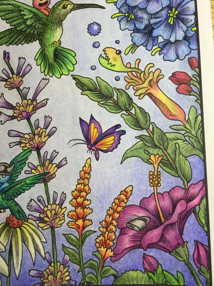 91 Best Images About Animorphia Coloring Book Completed