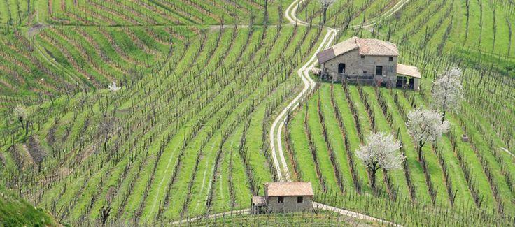 The beautiful Valdobbiadene's hills in Veneto