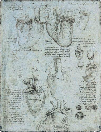 Leonardo da Vinci  - Dibujos de la anatomía del corazón, derecho