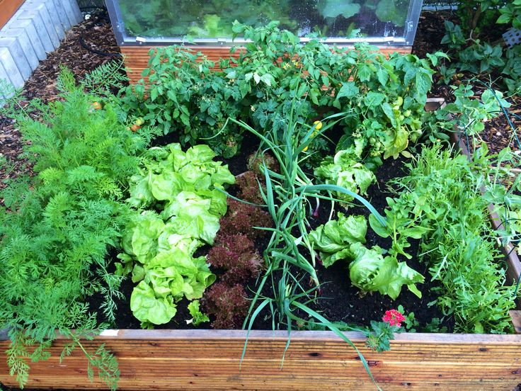 Vegetables in beds