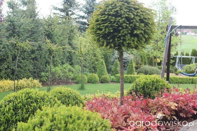 Ogród Sylwii od początku cz.II - strona 1134 - Forum ogrodnicze - Ogrodowisko