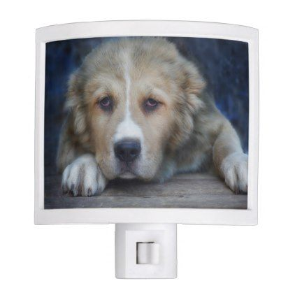 Central Asian Shepherd Dog Night Light - dog puppy dogs doggy pup hound love pet best friend